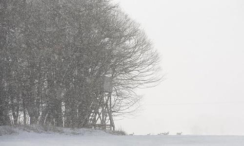schneegestöber am waldrand